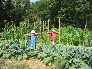 scarecrows in vegetable garden