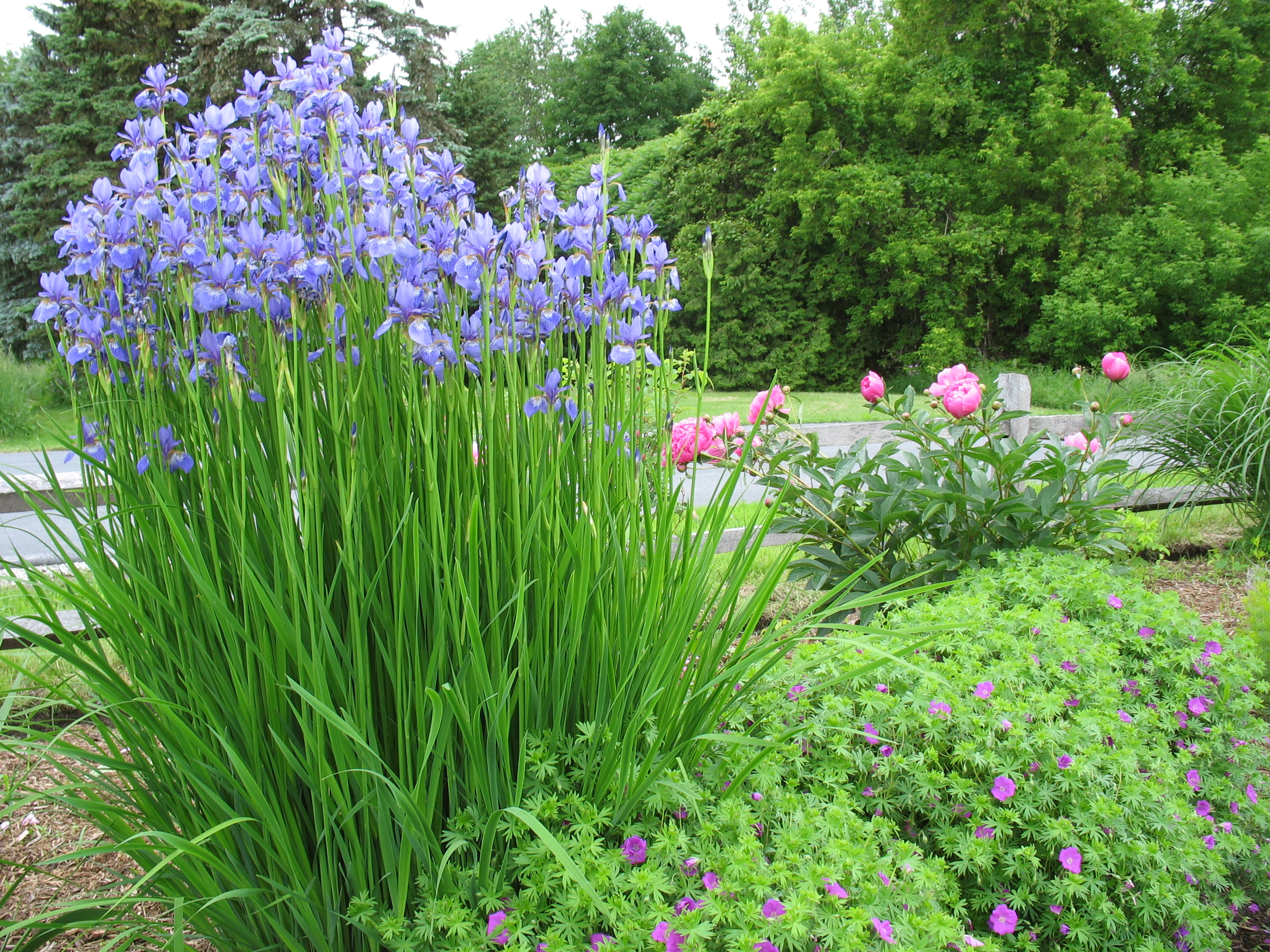 Taming The Weedy Monster How To Renovate A Perennial Bed The