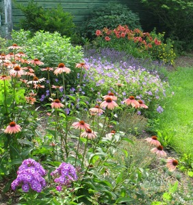 Taming the Weedy Monster   How to Renovate a Perennial Bed